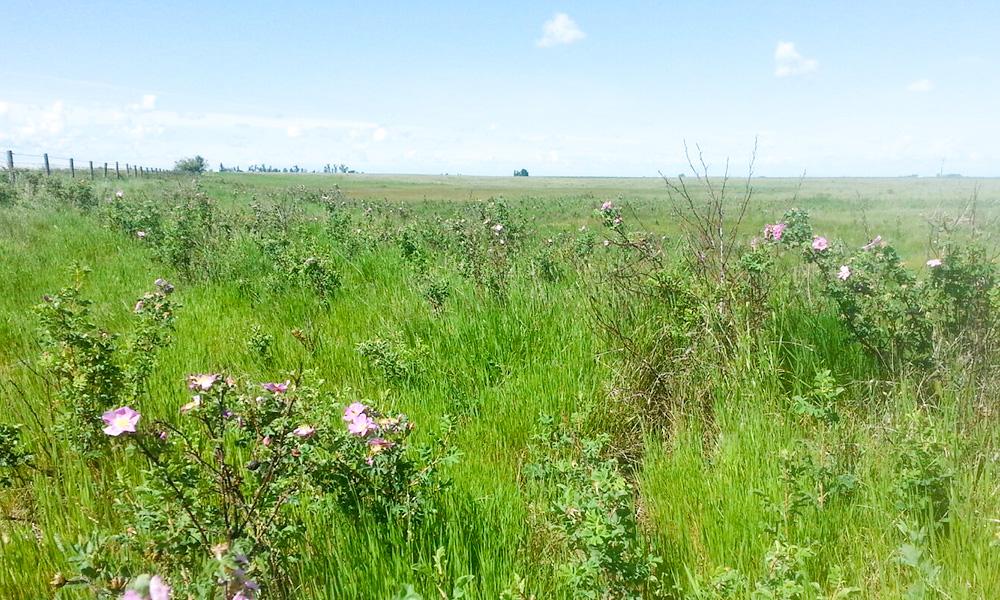 The wild Alberta prairie